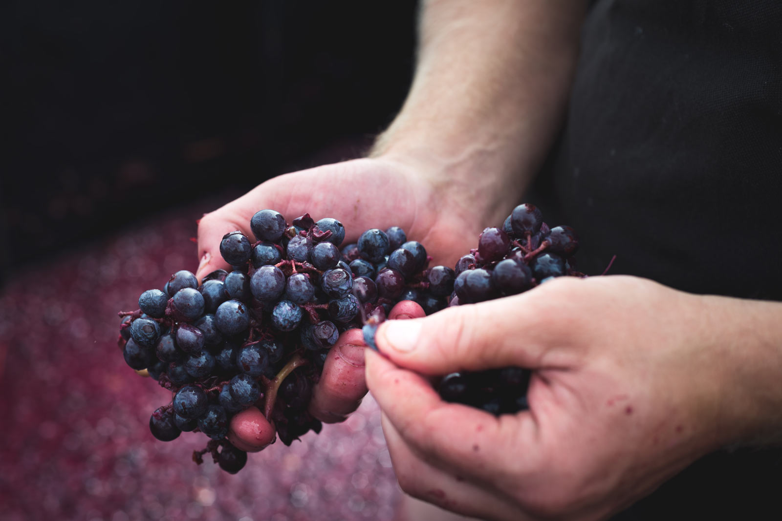 Lienert Vineyards - Grapes