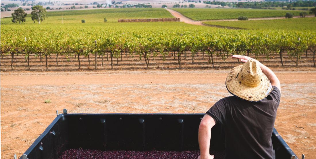 James Lienert - Lienert Vineyards Barossa