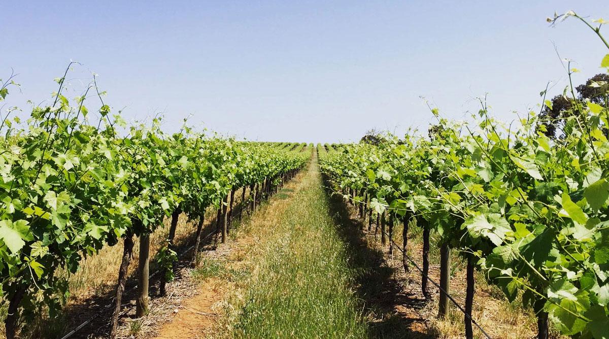 Lienert Vineyards